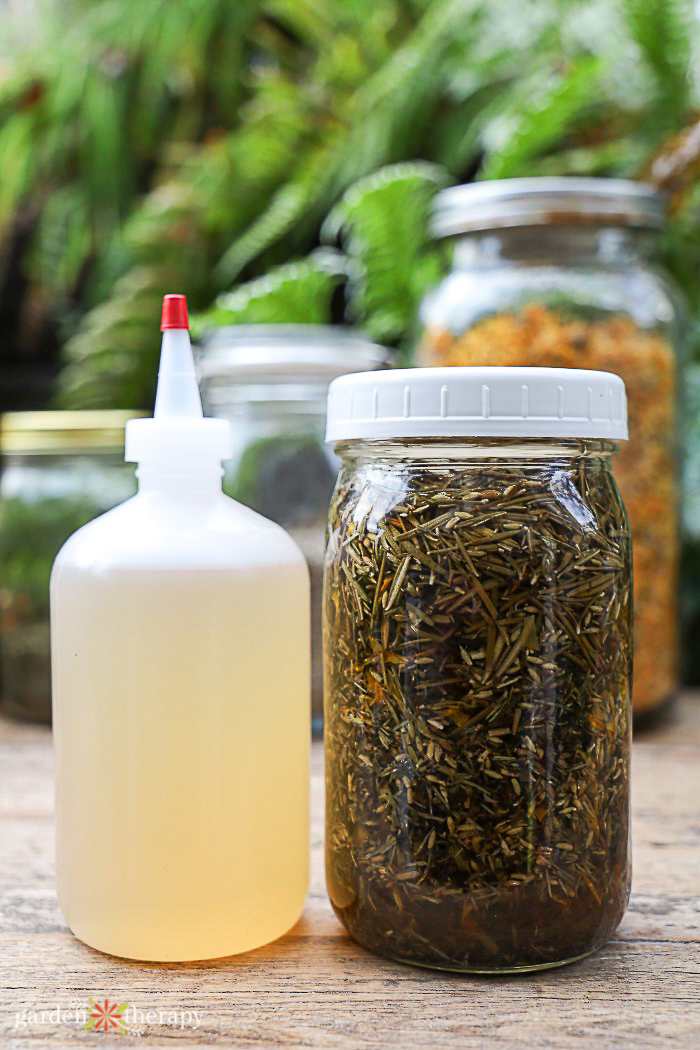 herbs infusing in mason jar next to apple cider vinegar hair rinse