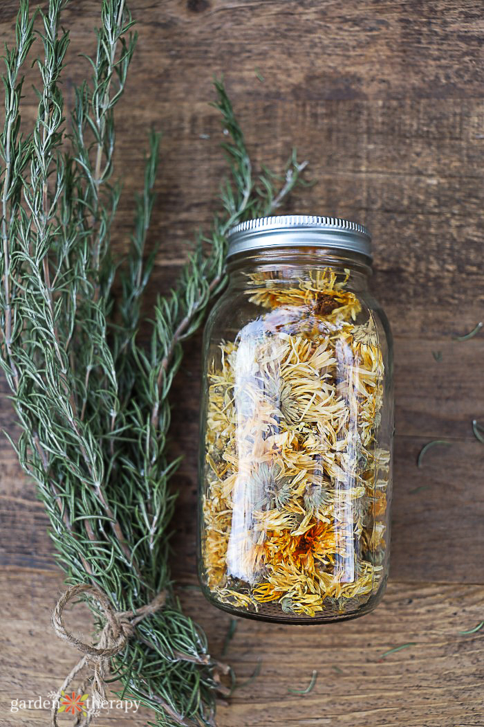 sprig of rosemary next to a mason jar of calendula herb