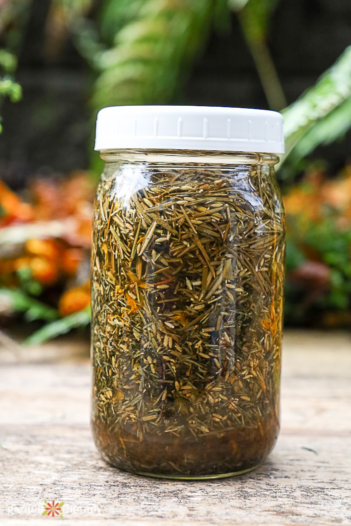 Jar of herbs infusing in apple cider vinegar to make a ACV hair rinse