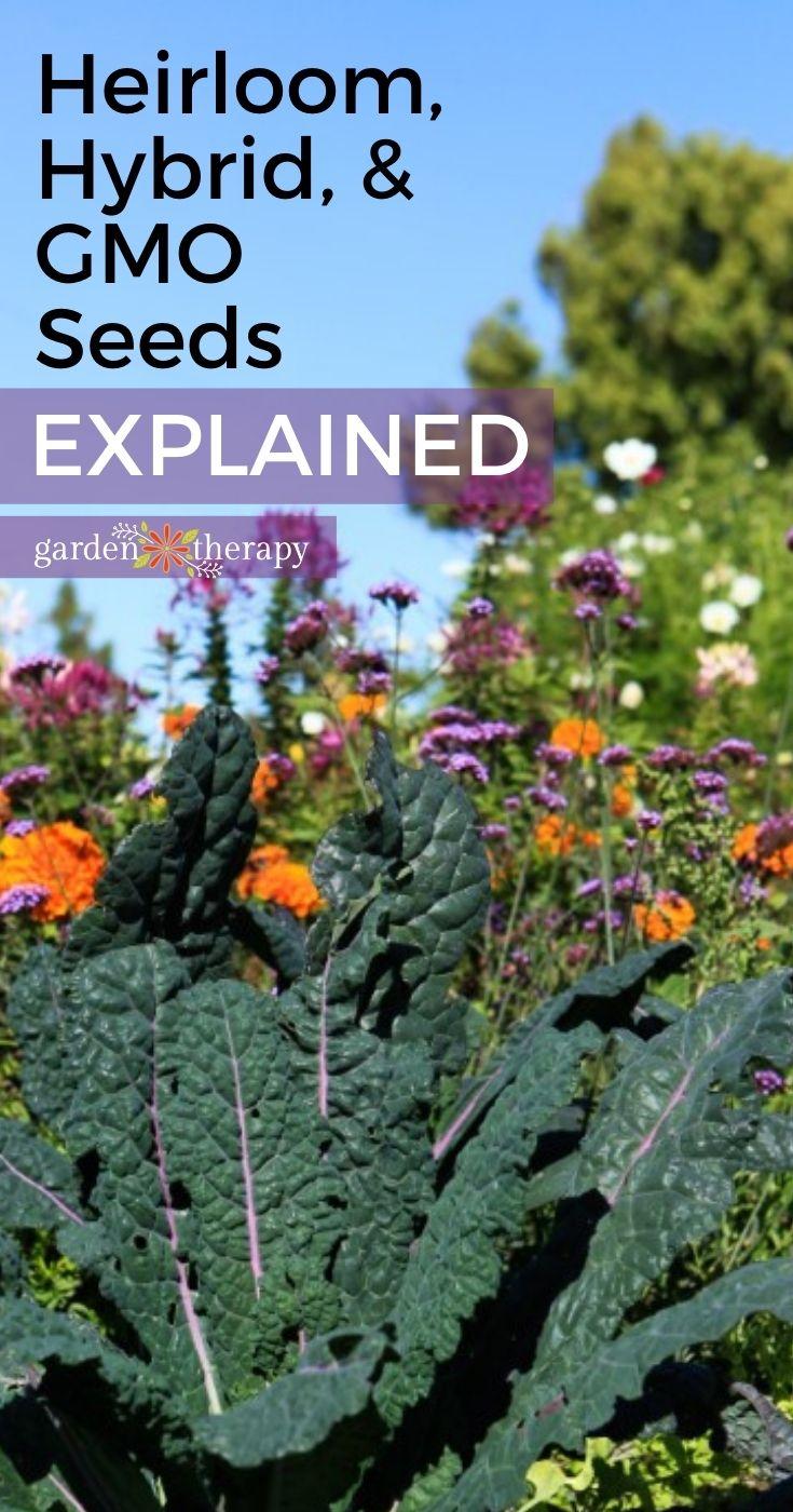 Flower garden grown from Heirloom, Hybrid, & GMO seeds