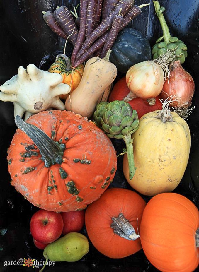 Heirloom Vegetables in a barrow