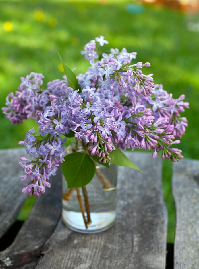 cut lilacs in a vase