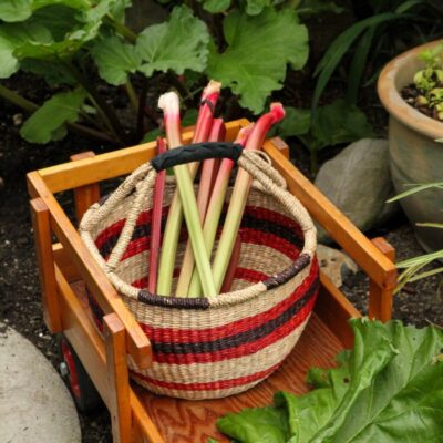 How to Harvest Rhubarb (NEVER Cut It!)