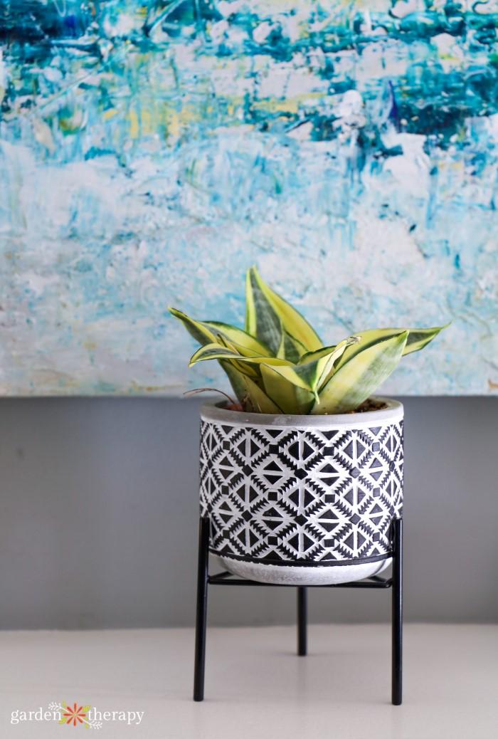decorative potted houseplant