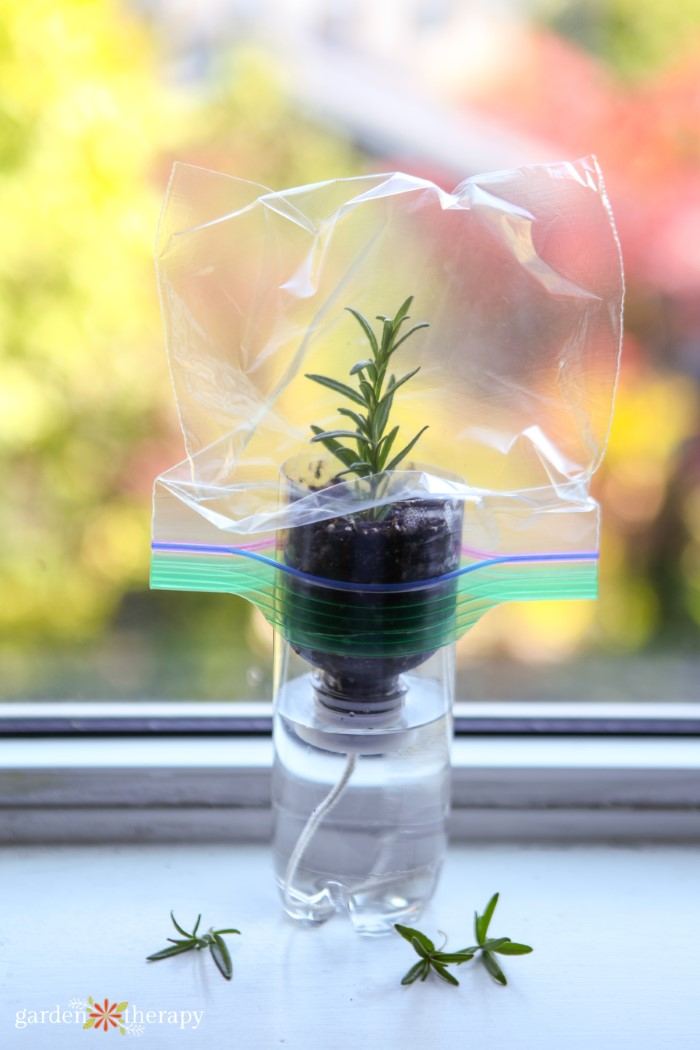 self-watering planter to root cuttings in soil