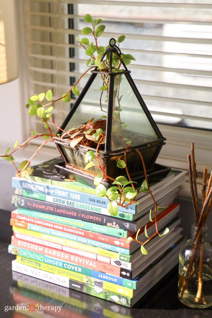 terrarium plant on a stack of books