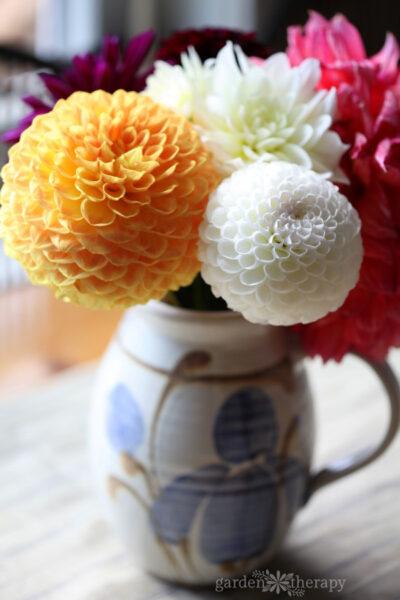 Random Acts of Flowers dahlias