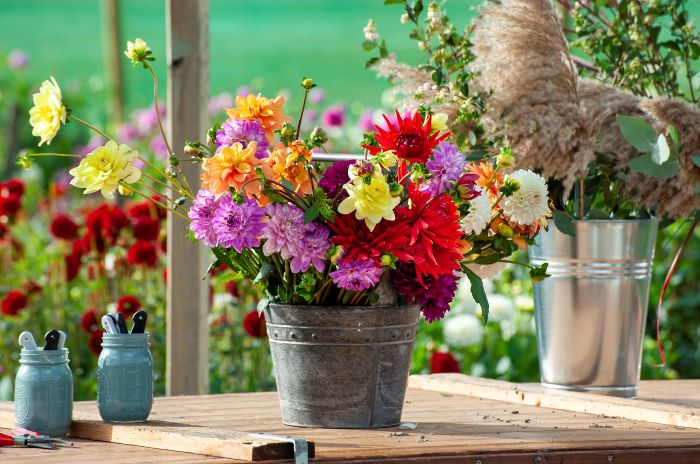 dahlia flowers for a cutting garden