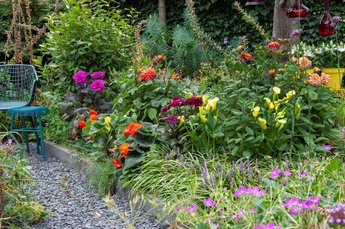 grow dahlias at home