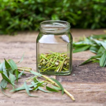 willow water homemade rooting hormone