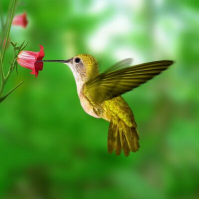 Attract Nature's Smallest Flyer with this Hummingbird Food Recipe