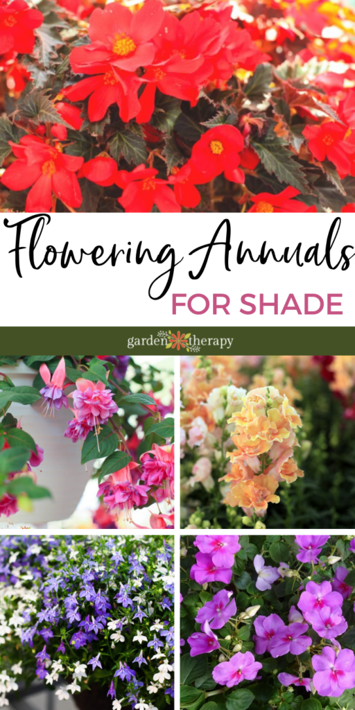 Flowering Annuals to Perk Up the Shade
