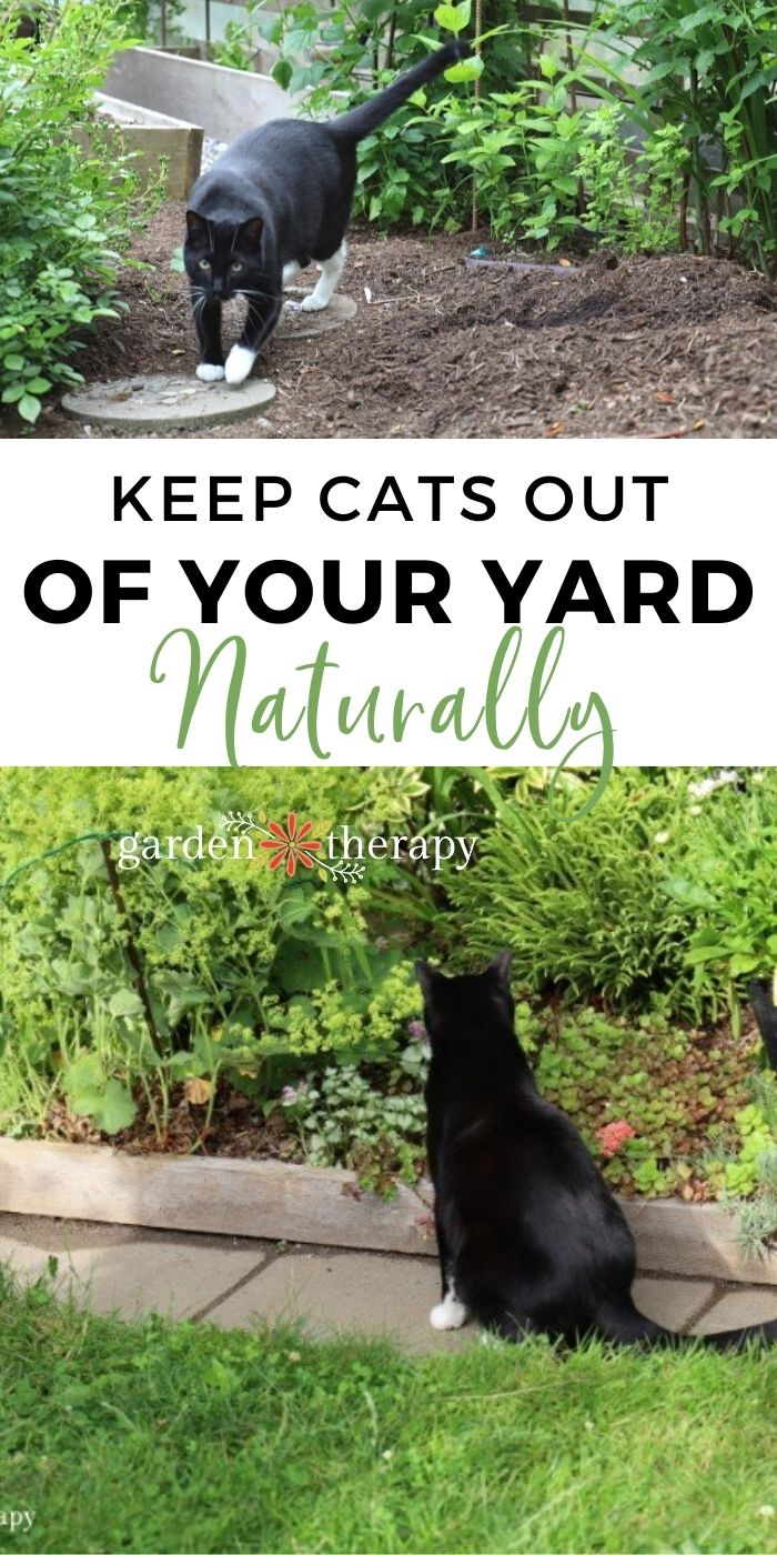 How to Keep Cats Out of Your Yard Naturally