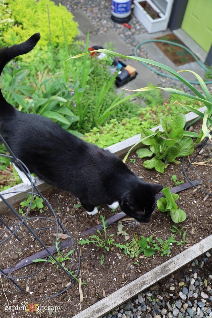 stray cat in the garden