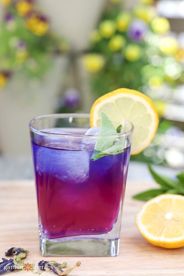 ombre butterfly pea flower drink