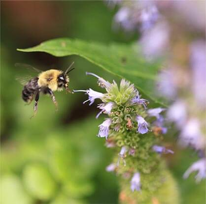 flower with bee hovering near