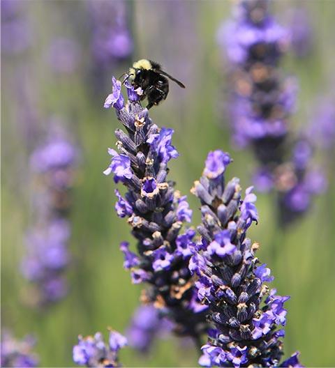 flowers bee