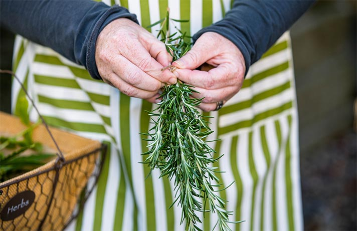 close up of woman in apron's hands tying a bunch of rosemary