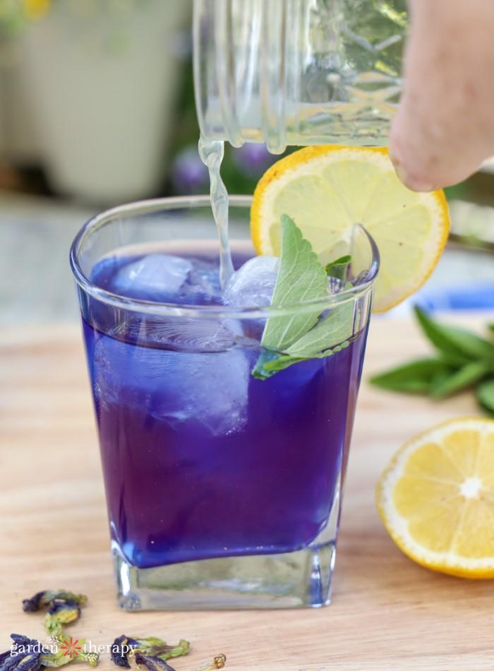 blue butterfly pea flower drink