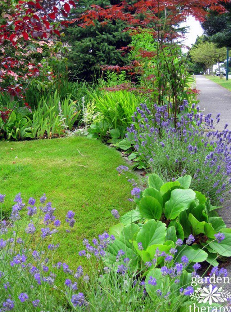 Stephanie's garden